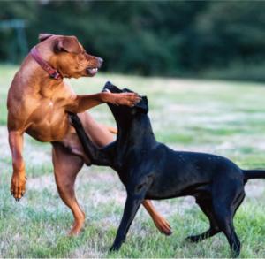 Rovers Return Pet Care
